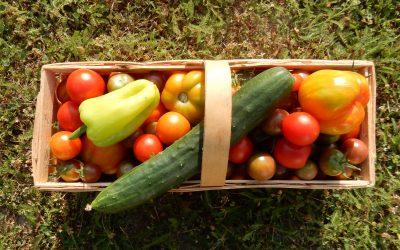 Die Gemüsegärtnerin in mir – Nutzpflanzen selber anbauen