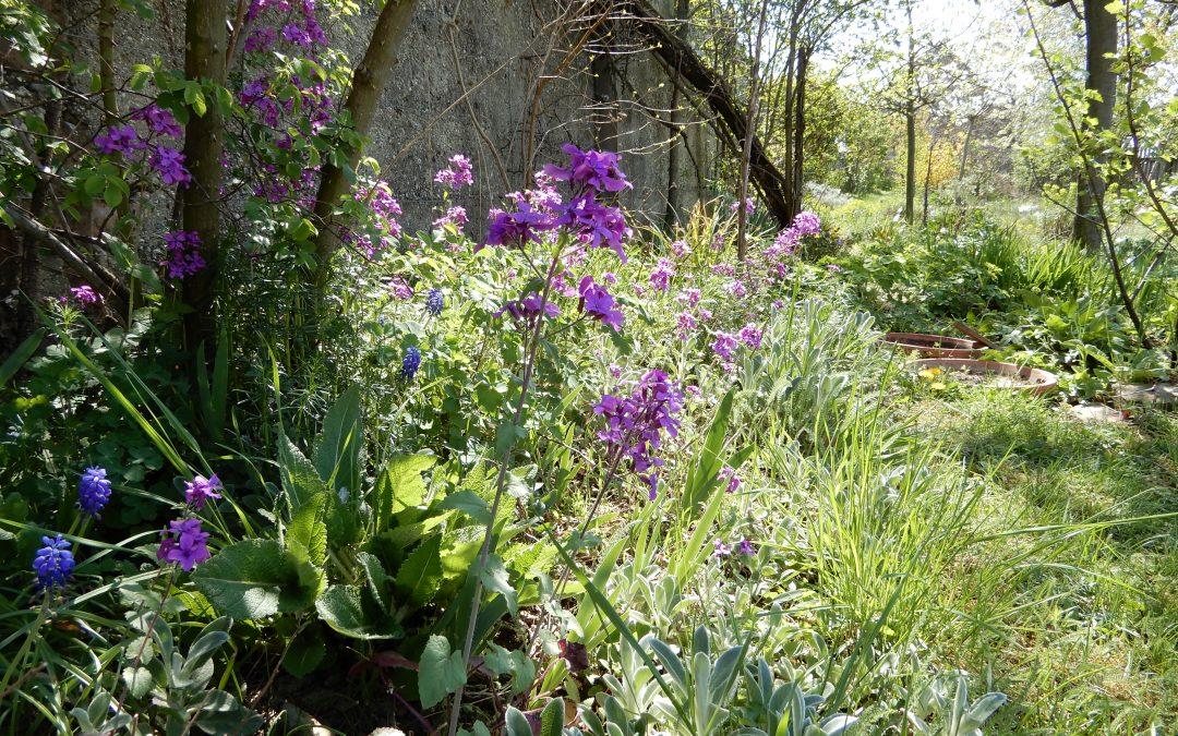 Blüten und ihre Besucher im wilden Nützlingsgarten – es summt, brummt und blüht am Osterwochenende