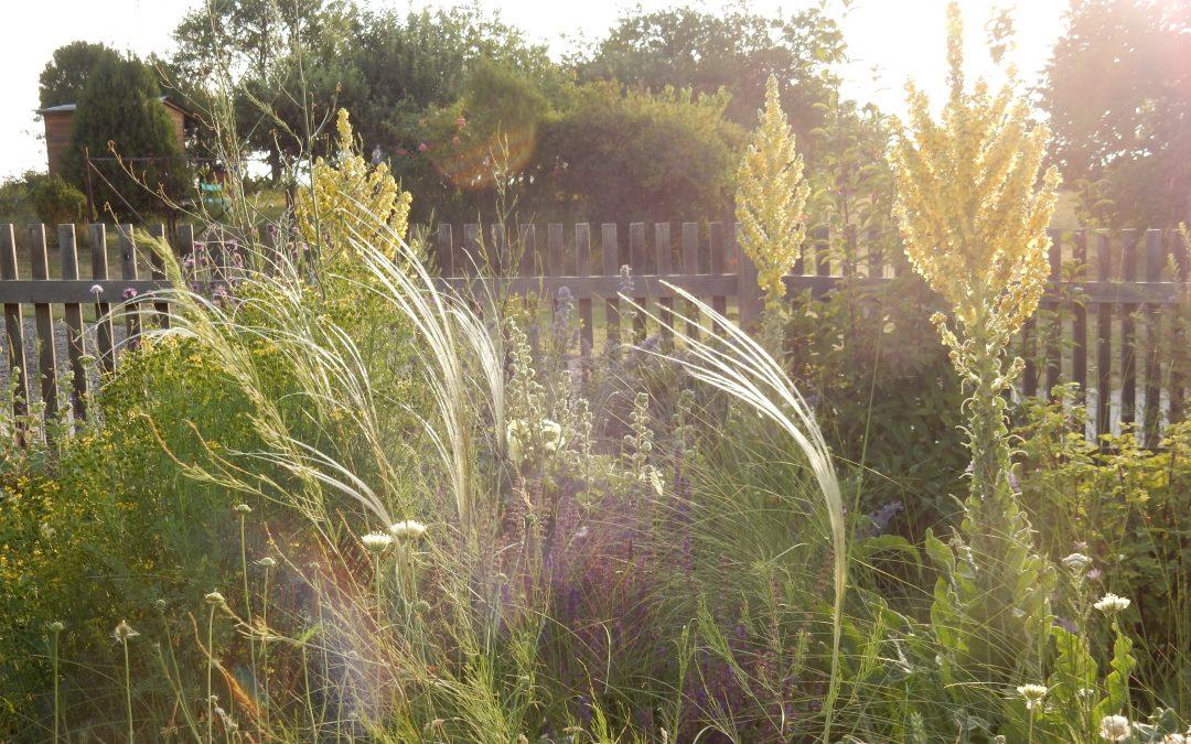 Der Steppengarten – eine klimawandelangepasste Bepflanzungsvariante
