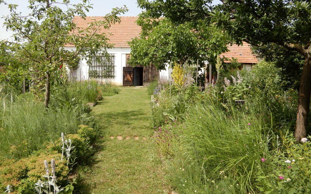 Frühsommer im weinviertler Nützlingsgarten