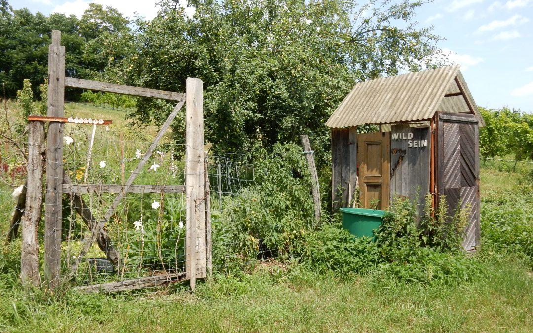 WILD SEIN – ein Interview mit der WILD SEIN Gärtnerin Martha Plößnig