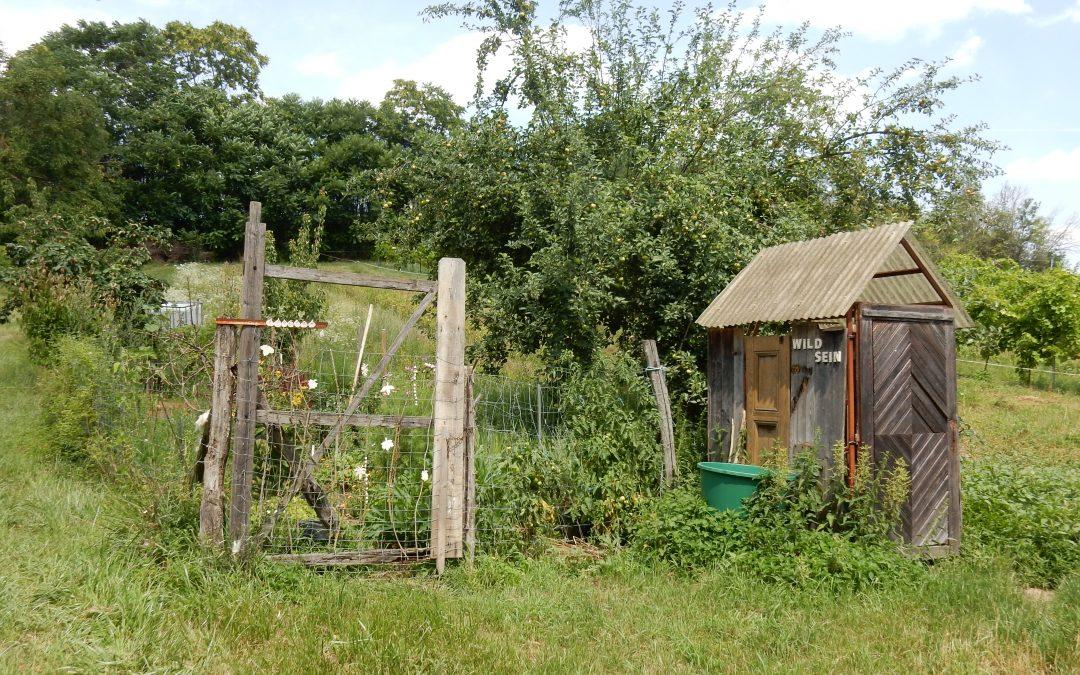 WILD SEIN – Nutzpflanzen für den wilden Garten