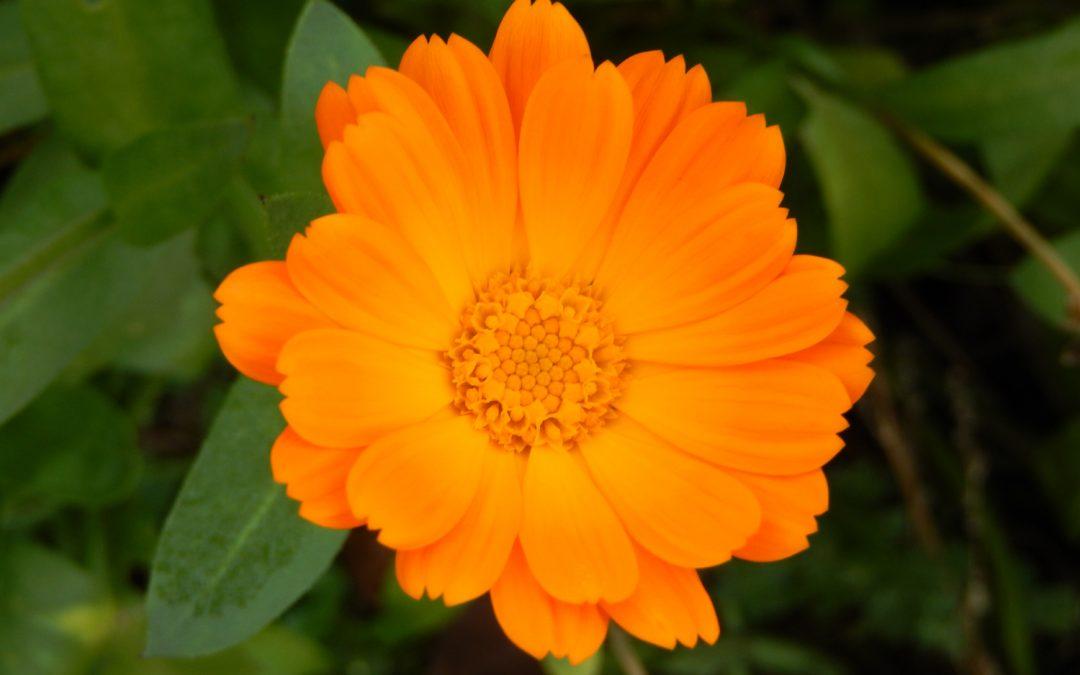 WILD SEIN – Exoten für Kräuter- und Blumengarten
