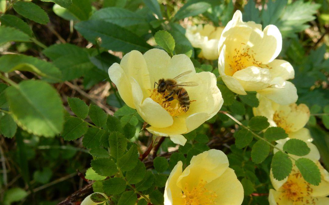 Die Welt der Honigbienen und Bienenmenschen