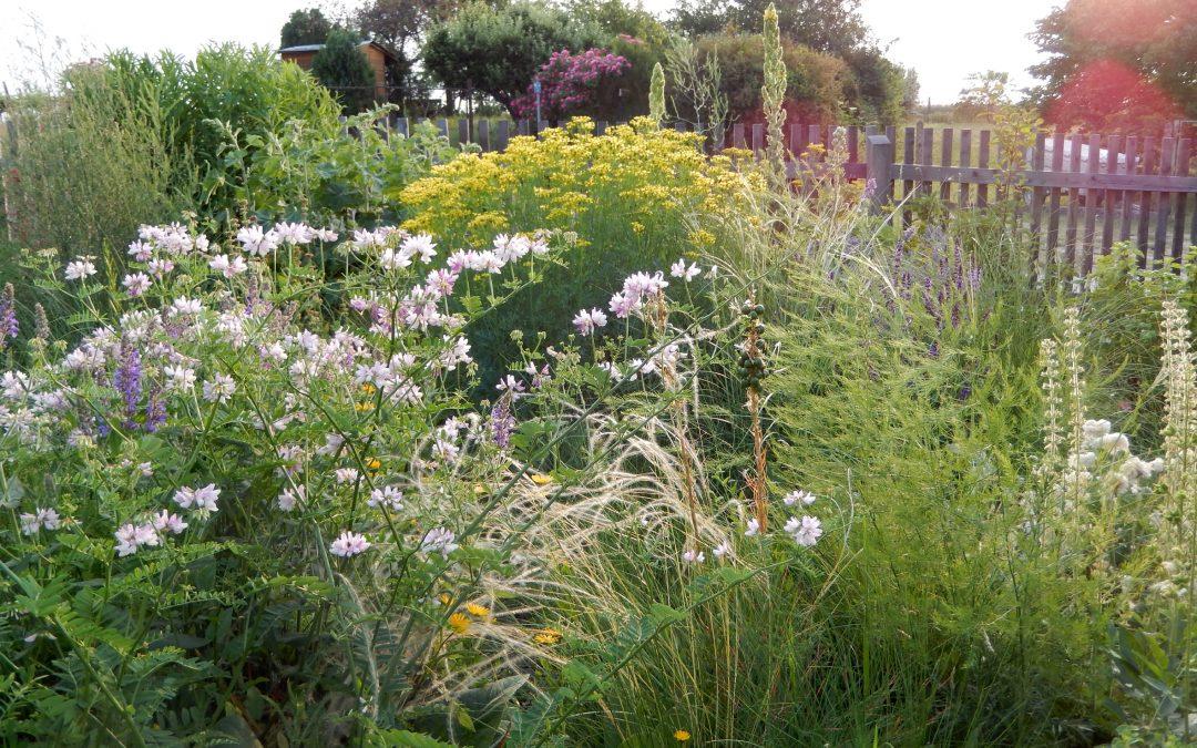 Attraktive Blumenbeete für Bienen, Schmetterlinge & Co. – Wo die wilden Nützlinge wohnen