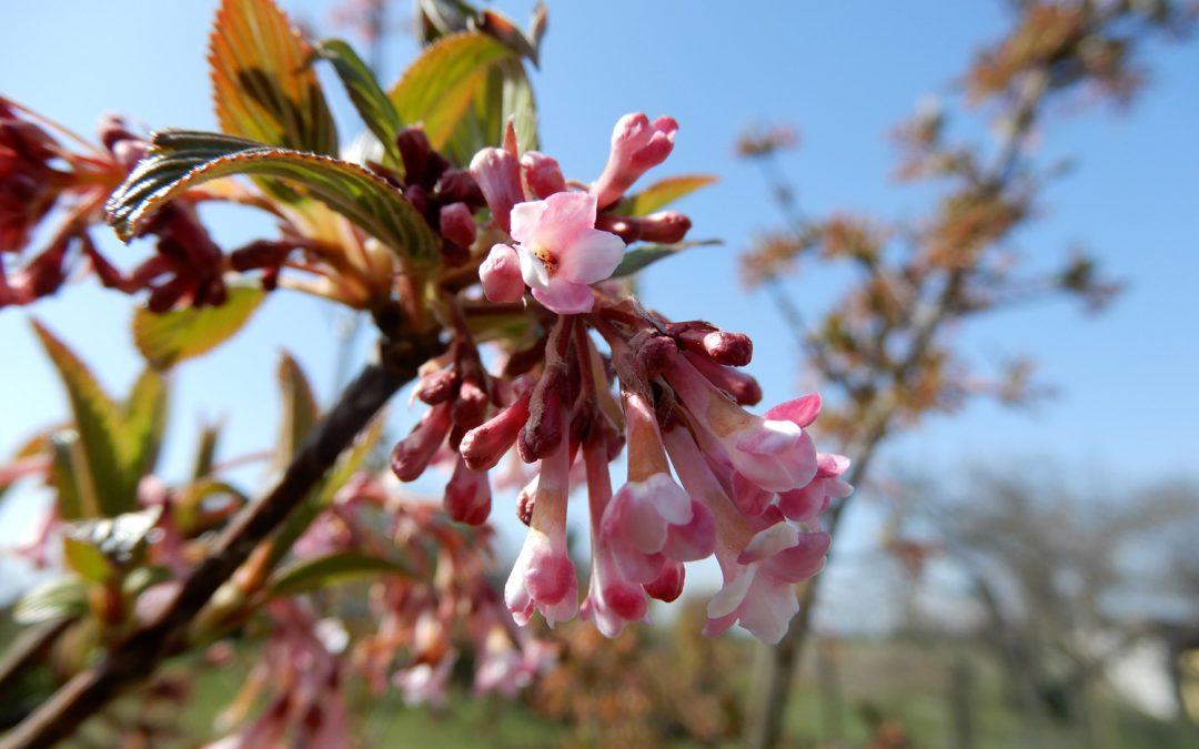 Bunte Vielfalt – Vorfrühlingsblüher im Garten