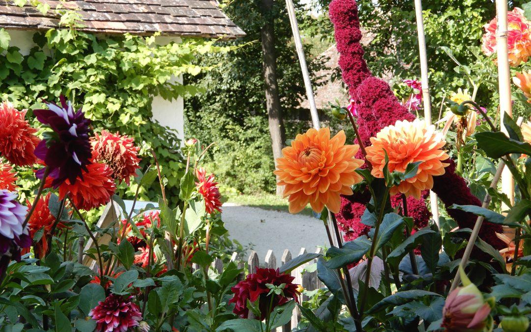 Vortrag beim Naturgartenfest Museumsdorf Niedersulz