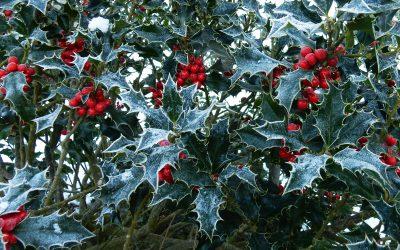 Attraktive Winter-Pflanzen für Wildtier und Mensch