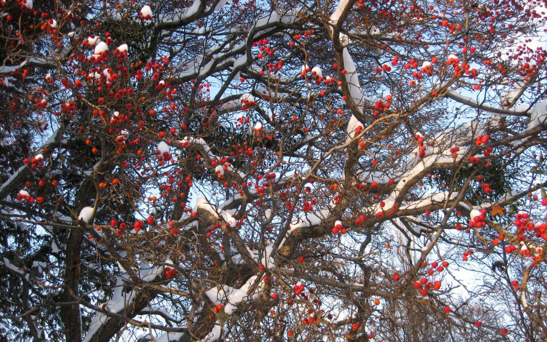 Winterlicher Fruchtbehang – schmackhaft für Wildtiere, attraktiv für uns Menschen